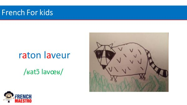 French For Kids : racoon in French is raton laveur